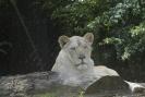 Zoo_14