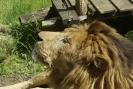 Zoo_15
