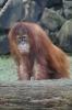 Zoo 26.03.2016_20