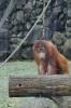 Zoo 26.03.2016_21