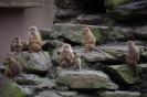 Zoo 26.03.2016